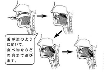 矯正治療と舌