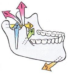 下アゴを動かす咀嚼筋の働き